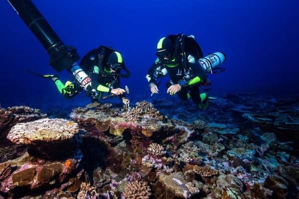 UNDER THE POLE III en polynésie française la plongée d'exploration au chevet des coraux profonds