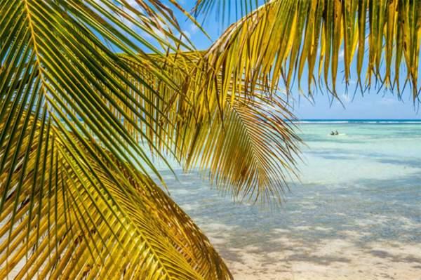 """Participez au webinaire """"Secrets des Îles de Guadeloupe"""" le 02 Février pour devenir Expert des Îles de Guadeloupe !"""
