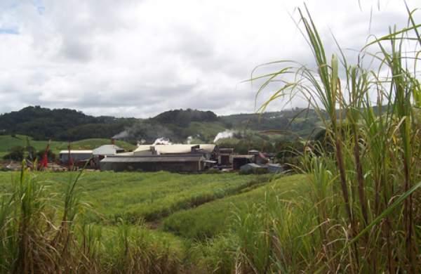 Naissance d'une nouvelle maison de rhum agricole : Baie des Trésors